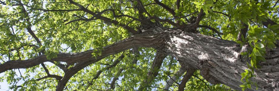 水の駅の木