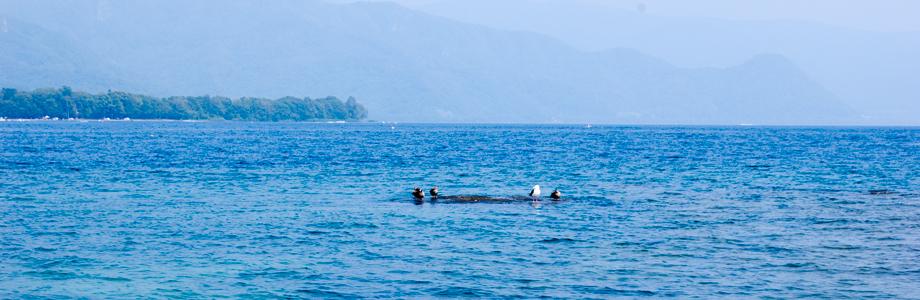 洞爺湖とカモメ